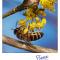Biene am Frühblüher