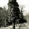 Efeu umrankter Baum