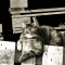 Sonnenbadende Katze (1)