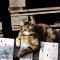 Sonnenbadende Katze (2)