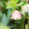 Frühblüher mit Tatterflare