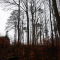 Wald im Frühjahr