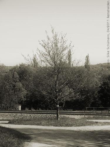 Baum im April (sepia)