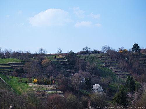 Alter Weinberg mit Terrassen