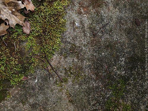 Herbstblätter und Moos auf Stein