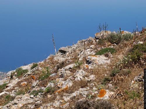 Karge Vegetation auf Kalkstein