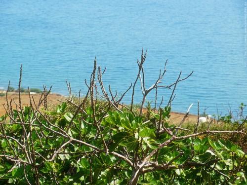 Mediterane Vegetation