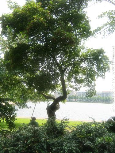 Verschnörkelter Baum an der Alster