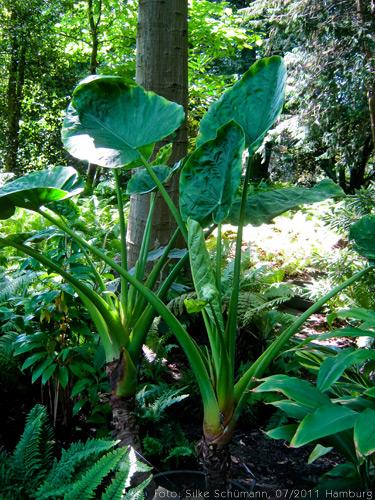Dschungelpflanze