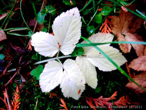 Herbstlaub (velvia)