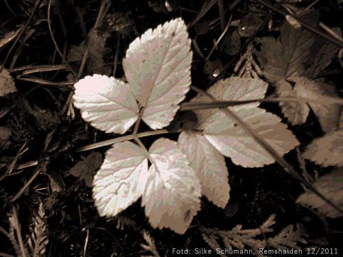 Herbstlaub (monochrom)