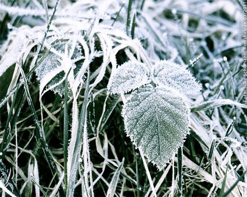 Eisiger Frost auf grün