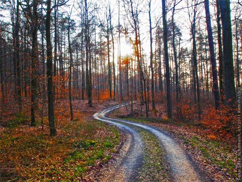 Silberner Waldweg
